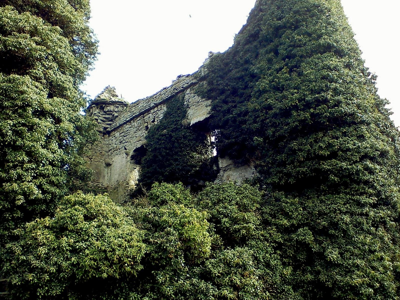 Drominneer Castle Ivy